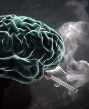 arr ter de fumer fait repousser le cerveau. Black Bedroom Furniture Sets. Home Design Ideas